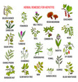 best herbal remedies for hepatitis vector image vector image