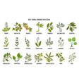 Best medicinal herbs for eczema