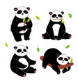 cute panda - flat design style set characters vector image vector image