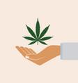 hand holding marijuana leaf vector image vector image