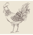 Profile of cock sketch vector image vector image