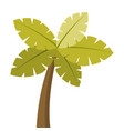 tropical palm tree exotic plant trunk nature vector image