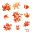 watercolor autumn leaves maple leaf flora vector image vector image