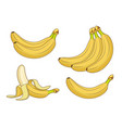 cartoon banana fruits bunches of fresh bananas vector image