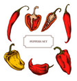 collection of hand drawn pepper highly vector image