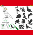 educational shadows game with birds characters vector image vector image