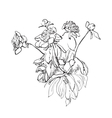 Flowers doodle sketch isolated vector image