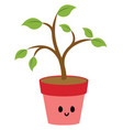 plant in pink pot on white background vector image vector image