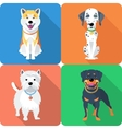 dog Akita Inu Dalmatian Rottweiler and West vector image vector image