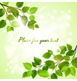 Fresh green background with spring leaves vector image