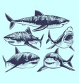 sketch shark swimming sharks with open mouth vector image vector image