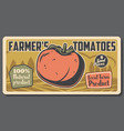 tomato farming and agriculture vegetable vector image