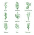 herbs sketch vector image vector image