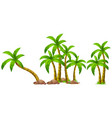 isolated palm tree on white background vector image vector image