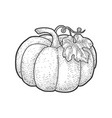 pumpkin sketch vector image