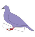 purple pigeon on white background vector image vector image