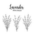 set lavender flowers vector image