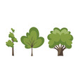 thin and thick trees decorative trees icon set vector image vector image