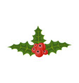 twig of holly with leaves and berries on white vector image