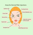 areas for rejuvenation cosmetological injections vector image vector image