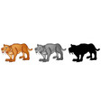 set of sabertooth tiger vector image vector image