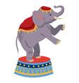 elephant circus entertainment balance icon vector image