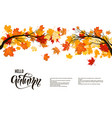 autumn nature branch vector image vector image
