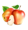 Red apples with slice vector image vector image