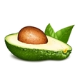 Avocado with core and leaves vector image vector image