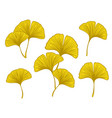 ginkgo biloba branches and leaves vector image vector image