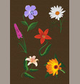 some several different flowers vector image vector image