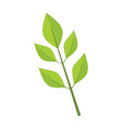 ash tree leaves graphic vector image