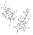 branches with leaves hand drawn vector image