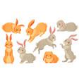 cartoon bunny rabbits pets easter bunnies vector image