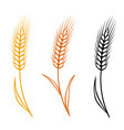 colorful isolated wheat ears set vector image vector image