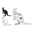 cut of kangaroo set poster butcher diagram vector image vector image