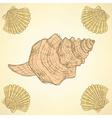 Sketch sea shells in vintage style vector image vector image