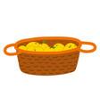 apples in wooden basket picking fruit vector image vector image