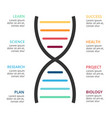 dna science infographic medical diagram vector image vector image