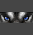 siberian husky bright blue eyes close up vector image vector image