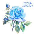Watercolor drawing of blue rose vector image
