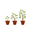 Abstract Flat Nature Plants Growth Graphic Design vector image