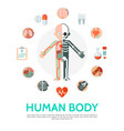 flat human body anatomy round concept vector image