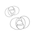 pleiospilos bolusii lithops succulent liner vector image vector image