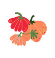 pumpkin fresh vegetable organic nutritious vector image vector image