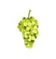 Realistic green grapes isolated on white backgroun vector image