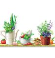 Still life with garden herbs vector image vector image