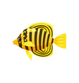 tropical exotic butteflyfish bright colorful vector image