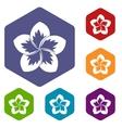 Frangipani flower icons set vector image