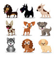 cute happy dogs cartoon funny puppies vector image